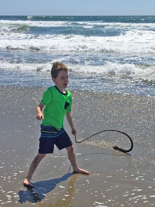 Seaweed rope