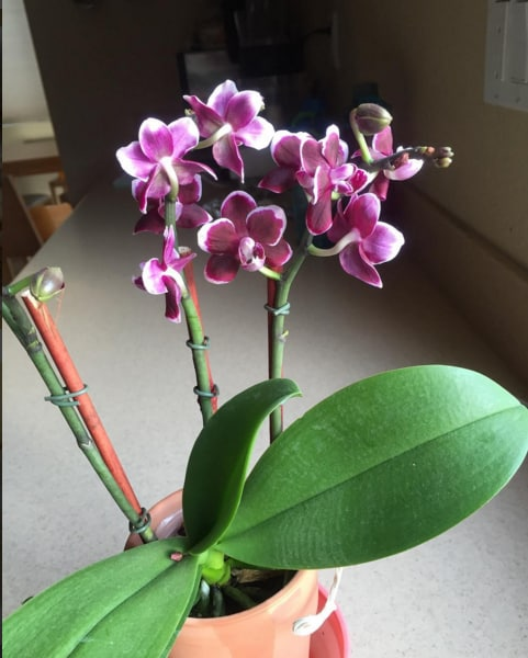 Orchid - Friday Fun