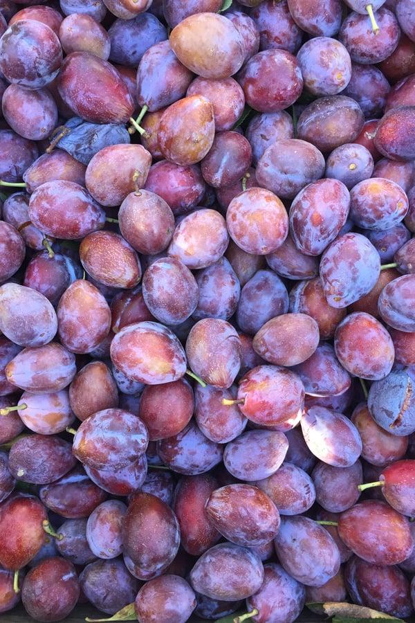 fresh prune plums
